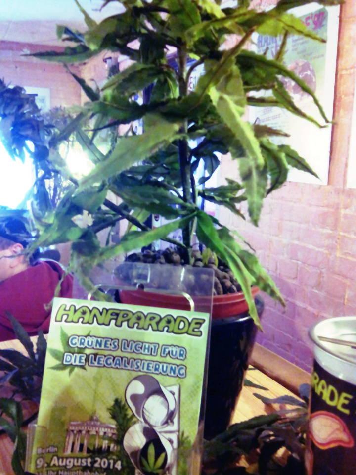 Foto einer künstlichen Deko-Hanf-Pflanze im Café des Hanf Museums Berlin