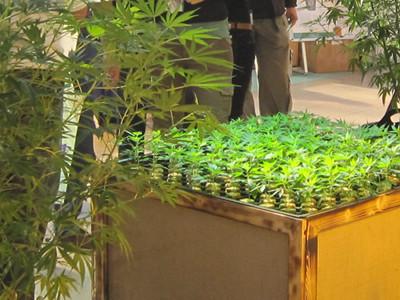 Foto von Stecklingen auf der Cultiva 2012