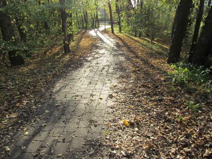 Foto eines dunklen Weges im Park mit Herbstlaub