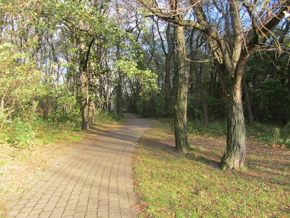 Foto eines Parkweges mit Bäumen im Herbstsonnenschein