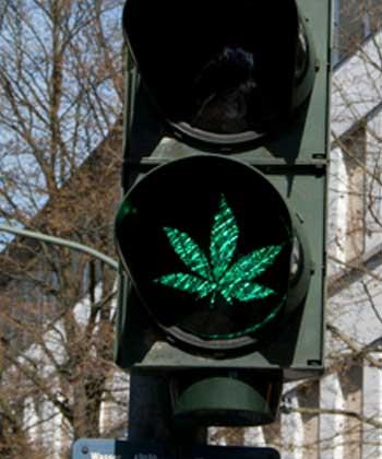 Hanfampel zeigt grünes Licht