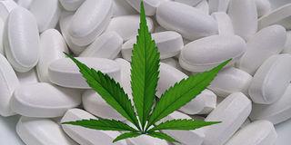 Cannabis als Medizin Grafik